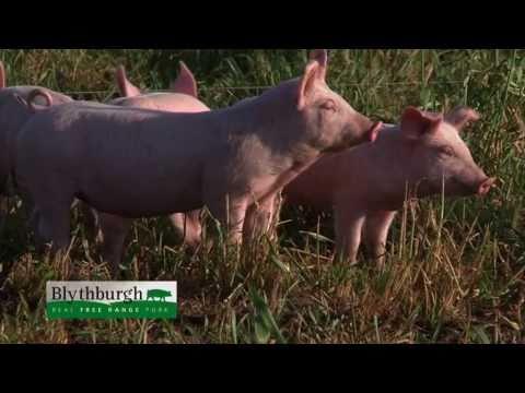 How our free range pork is raised